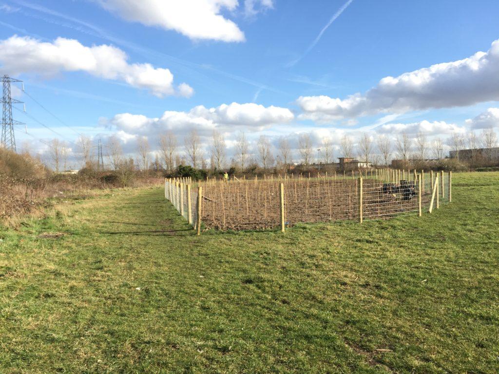 Cheney Row Park E17 tree planting